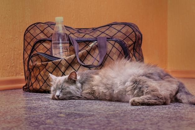 회색 고양이는 가방과 물 한 병 근처에 누워 있습니다. 기차역에서 기차를 기다리고 있습니다. 여행 중 가방을 소지 한 승객 _