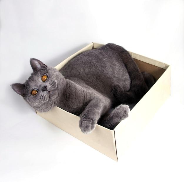 Серый кот лежит в картонной коробке. белый фон, крупный план, горизонтальное фото.