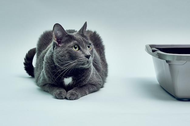 새 고양이 트레이 근처 회색 고양이