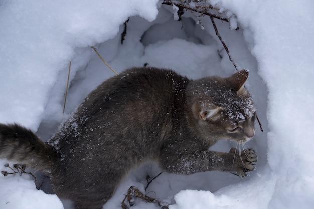 白い雪の背景に灰色の猫
