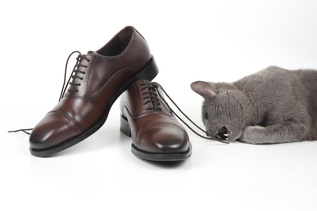 회색 고양이 흰색 배경에 클래식 레이스 남자의 갈색 구두와 연극