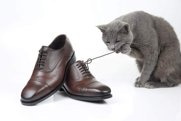 회색 고양이 흰색 배경에 클래식 레이스 남자의 갈색 구두와 함께 재생