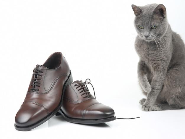 회색 고양이는 흰색 표면에 클래식 레이스 남자의 갈색 구두로 활약