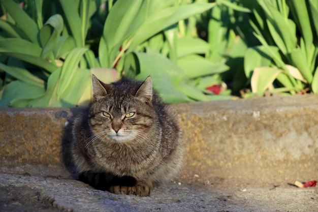 A gray cat sits on the asphalt near a flower bed