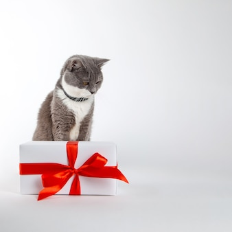 A gray cat sits near a gift with red ribbon on white.