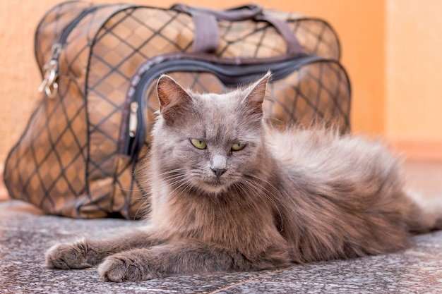 A gray cat sits near suitcase. waiting for the train at the train station. passenger with a suitcase while traveling