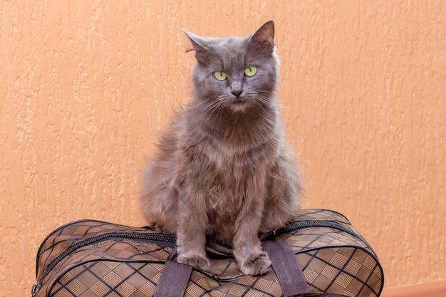 회색 고양이는 가방에 앉는다. 기차역에서 기차를 기다리고 있습니다. 여행 중 가방을 소지 한 승객