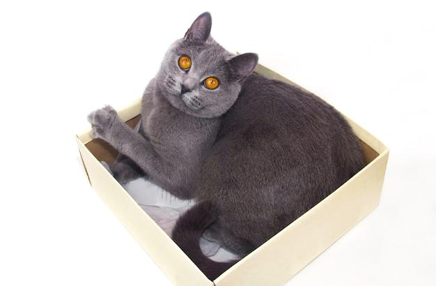 Серый кот сидит в картонной коробке. белый фон. изолировать.