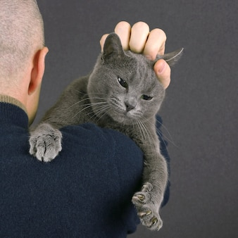 Gray cat sitting on the shoulder of a man. the relationship of pet and man