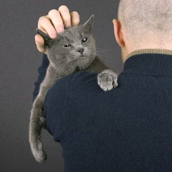 Gray cat sitting on the shoulder of a man . the relationship of pet and man