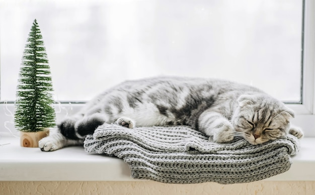 Серая кошка спит на окне в зимний день