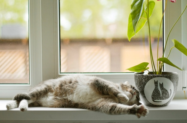 Gray cat sleeping on the windowsill next to a flower in a pot with cats