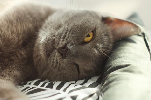 床の柔らかく居心地の良いベッドで目を開けて眠っている灰色の猫。ロシアンブルーの猫、クローズアップ。ペットの世話、人間の友人。