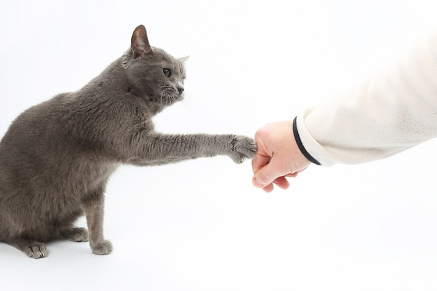 Gray cat touches paw with claws the hand of the man