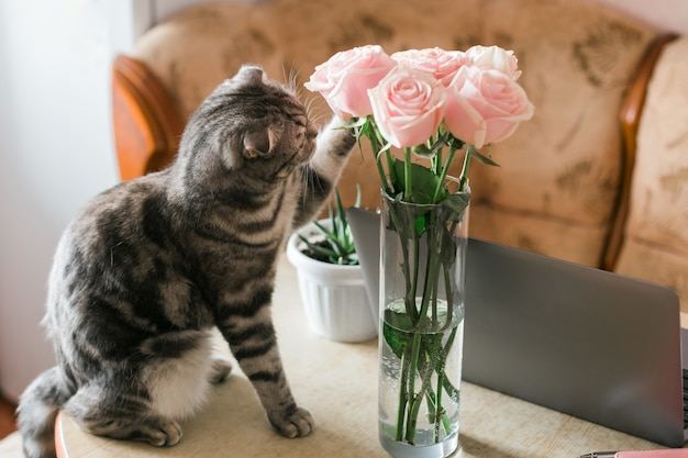 Серый кот трогает розовые розы в стеклянной вазе дома