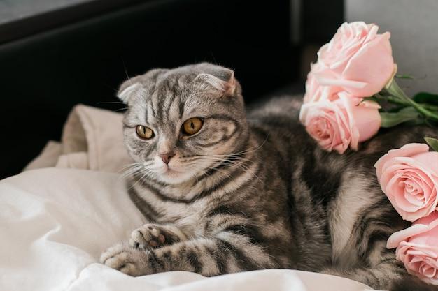 Серый кот с букетом розовых роз на кровати