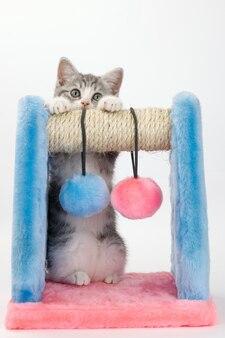 Серый кот с устройством для игры и точения когтей на белой поверхности