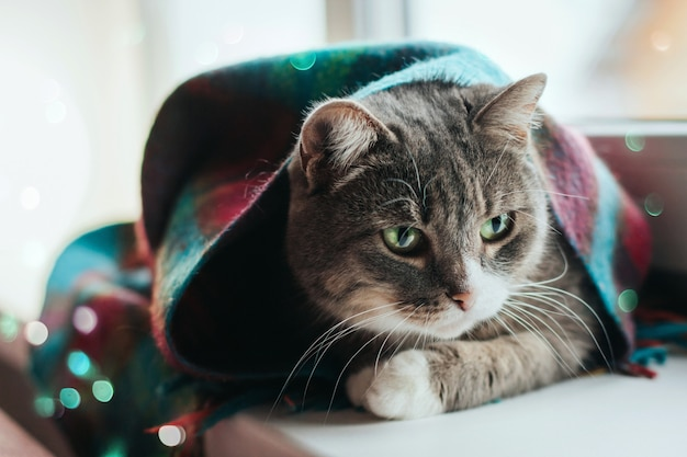 A gray cat with green eyes sits on a windowsill wrapped in a warm wool scarf.