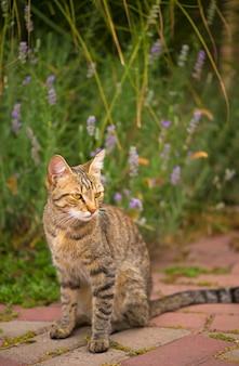 家の近くに座っている猫の緑色の目を持つ灰色の猫。ふわふわの猫、美しいペットの動物。野生の猫の外。通りの猫