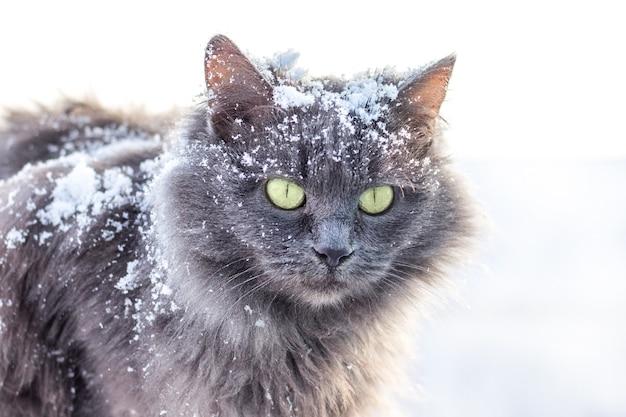 自然の中で羊毛に雪と灰色の猫