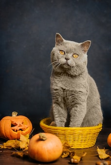 A gray cat with yellow eyes sits in a small yellow basket surrounded by autumn leaves and pumpkins