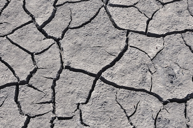 Gray cracked soil