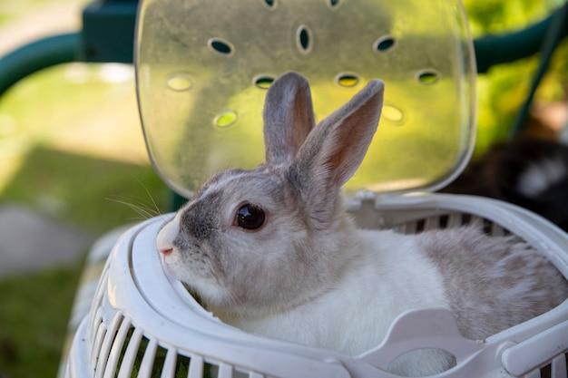 キャリアに座っている灰色の装飾的なウサギ。クローズアップ