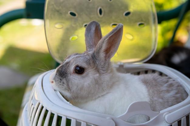 キャリアに座っている灰色の装飾的なウサギ