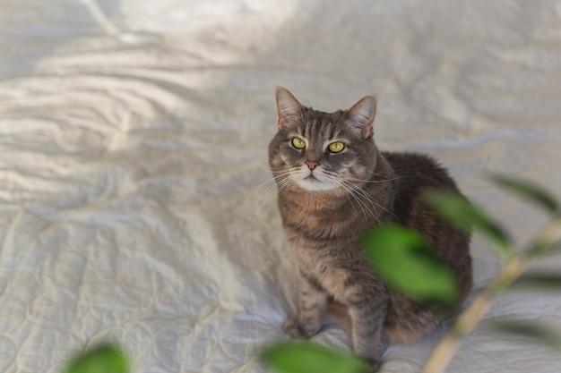 植物の緑の葉に囲まれたベッドの上に美しい目をした灰色の飼い猫。コピースペース