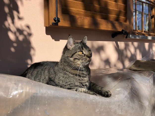 Gray domestic short-haired cat sitting on a rock in crema, italy