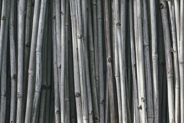 Gray dry bamboo  that is arranged vertically.