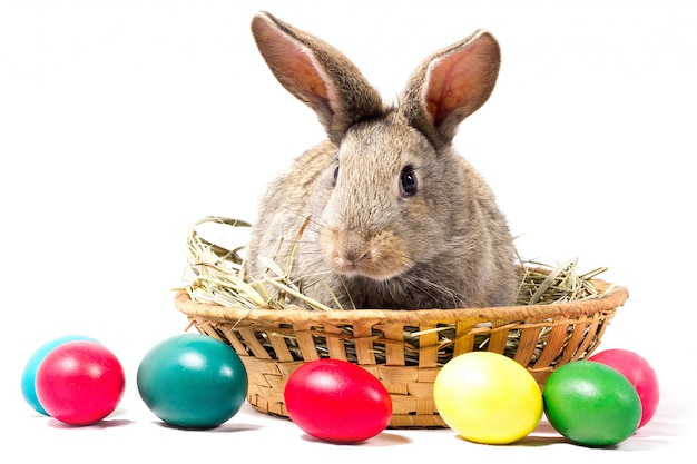Gray easter bunny sits in a basket, isolate, blank for easter holiday, concept to easter.