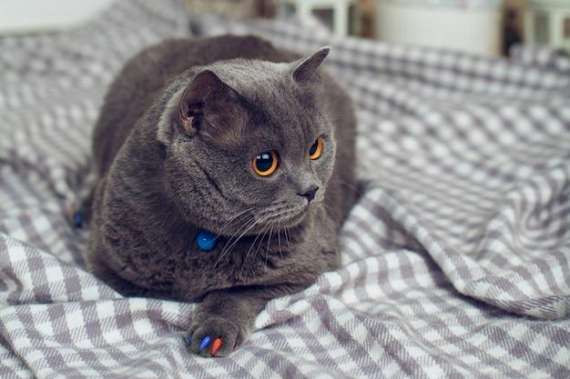 灰色の市松模様の背景に黄色い目を持つ灰色の太った猫