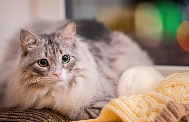 Серый толстый пушистый кот сидит на подоконнике среди клубков пряжи