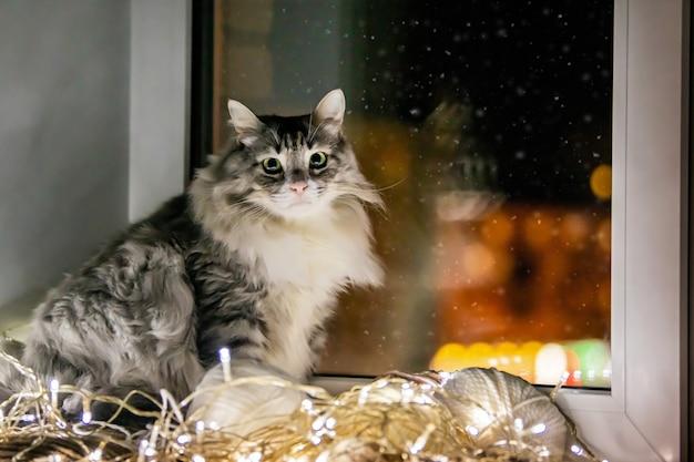 회색 뚱뚱한 솜털 고양이는 저녁에 내려가는 눈을 배경으로 화환 옆 창턱에 앉아 있습니다.