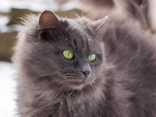 灰色のふわふわ猫は冬の屋外でクローズアップ