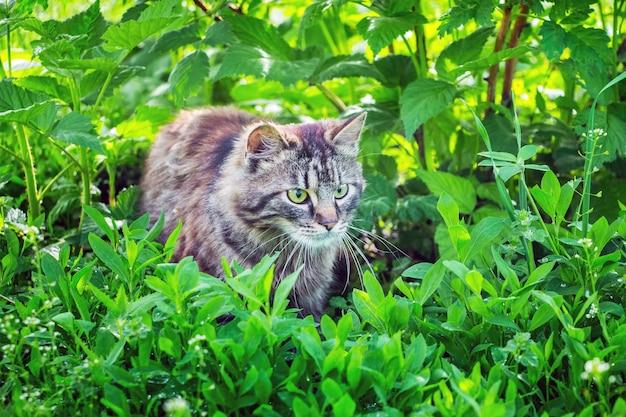 ラズベリーの葉の間の庭の灰色のふわふわ猫