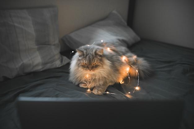 Серый пушистый кот лежит на кровати и с упором смотрит на экран ноутбука