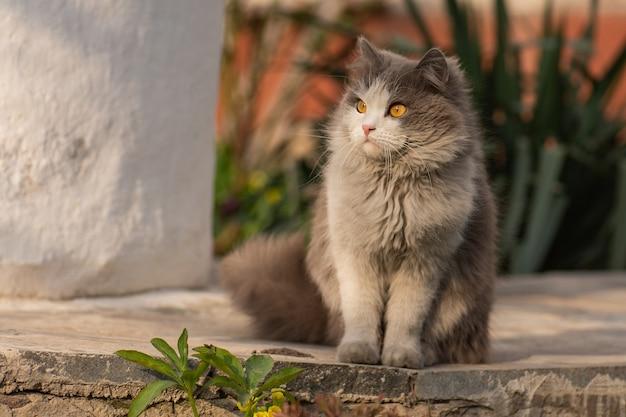 灰色のふわふわ猫が花の中に座っています。歩道の猫