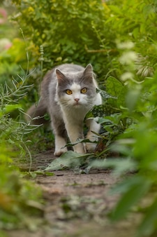 灰色のふわふわ猫が花の中に座っています