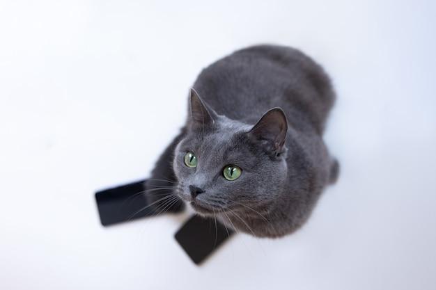 灰色のふわふわ猫は携帯電話と白い背景の上に座って
