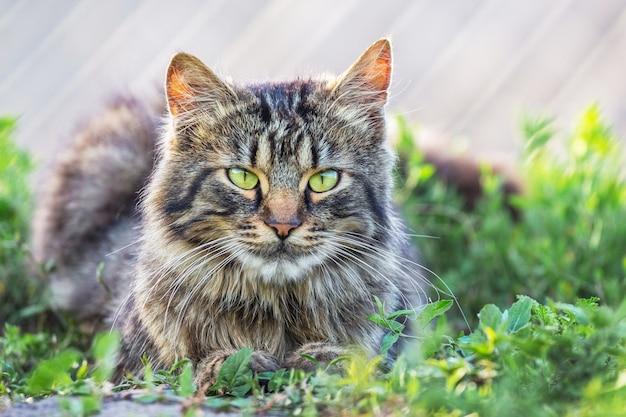 灰色のふわふわ猫が草の上に座っています