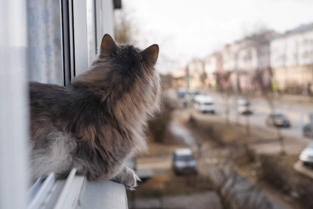 Серый пушистый кот сидит на окне и смотрит на улицу.