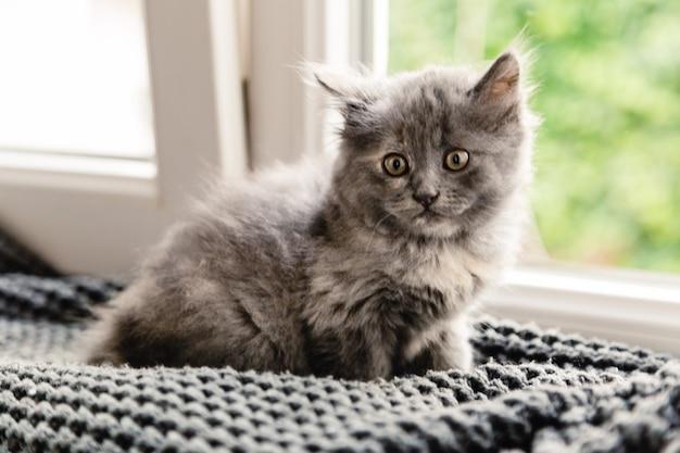 Gray fluffy kitten sitting on windowsill near window.