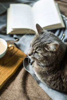 A gray fluffy pet cat on a blanket next to a cup of coffee and a book