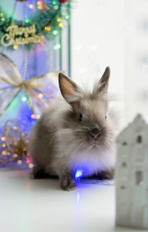 Gray fluffy rabbit sits near christmas decorations and lights