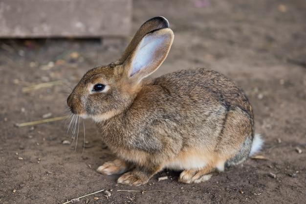 灰色の面白いウサギは砂の上の庭に座っています
