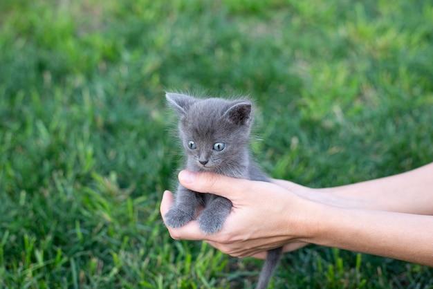 手に灰色の子猫。外の猫と緑の芝生。コピースペース
