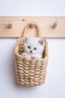 Gray kitten inside basket on coat rack