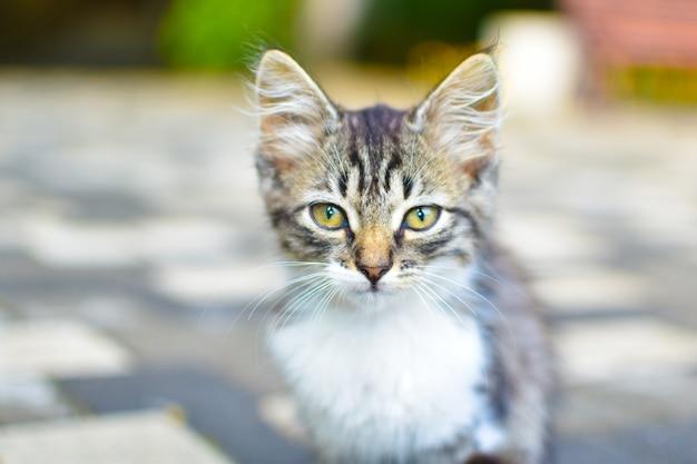灰色の子猫が通りで迷子になりました。小さな猫は街に一人でいます。